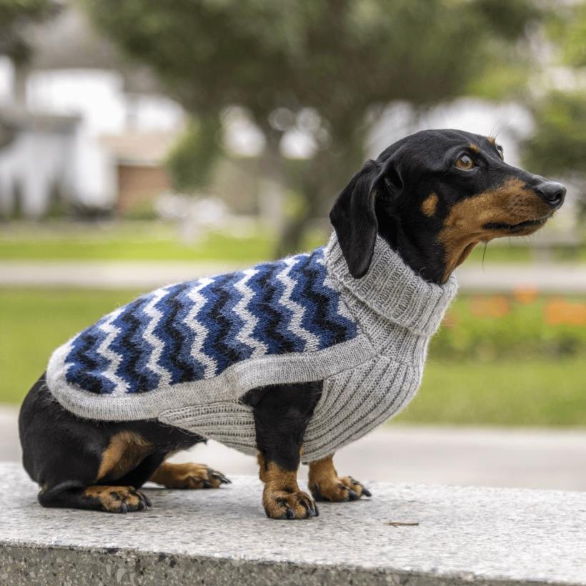 Alqo-Wasi-Hundepullover-chevron-blue-mit-dackel