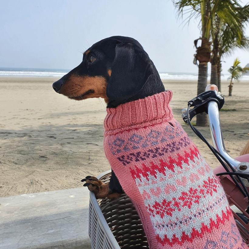 Alqo-Wasi-Hundepullover-fall-medley-pink-mit-dackel