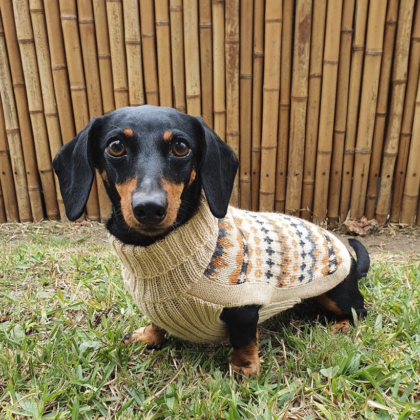 Alqo-Wasi-Hundepullover-golden-dreams-mit-dackel