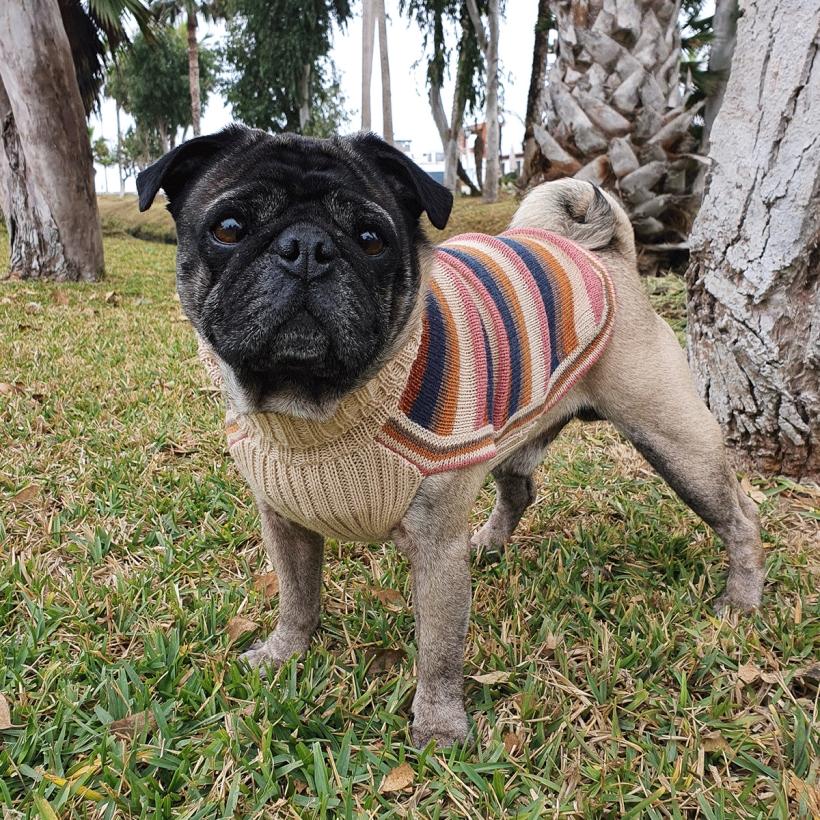 Alqo-Wasi-Hundepullover-honey-stripes-mit-mops
