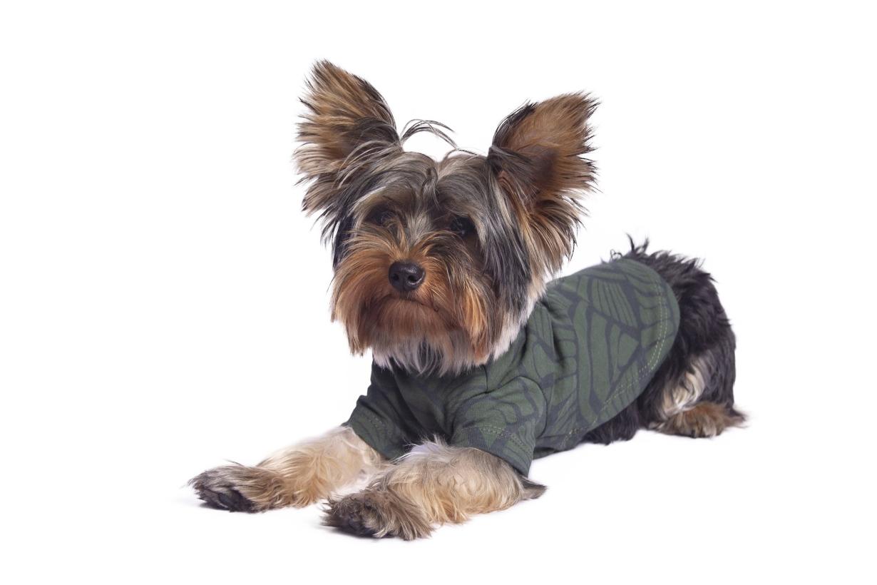 Alqo-Wasi-t-shirt-seashell-green-mit-yorkshire-terrier