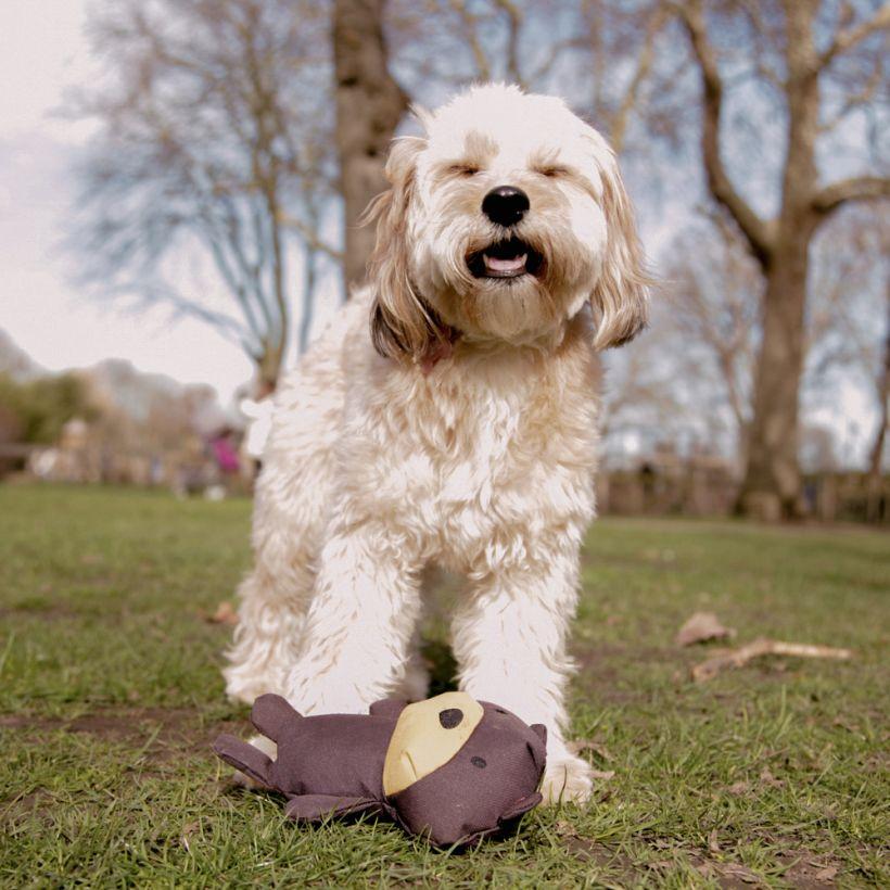 Beco-Hundespielzeug-Baer-inaction