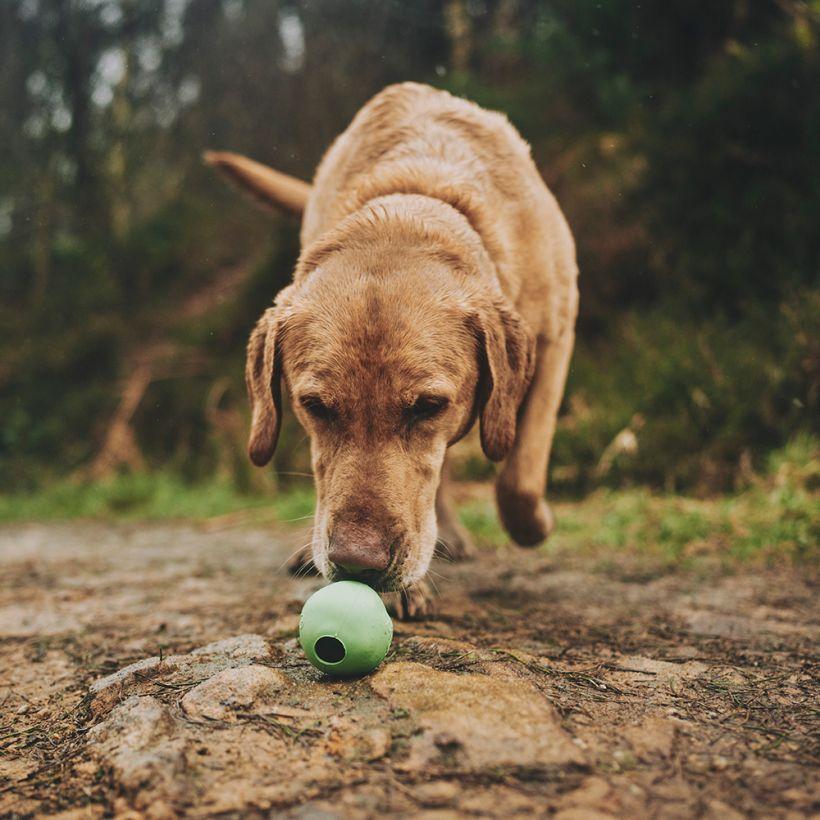 Beco Hundespielzeug Ball Grün in action