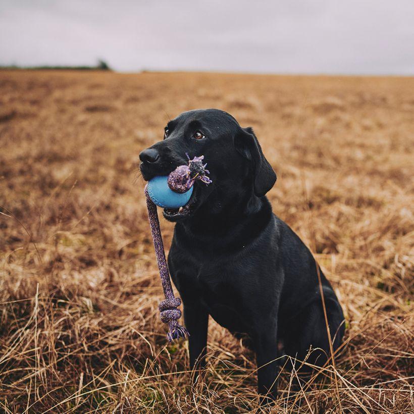 Beco Hundespielzeug Ball mit Seil Blau in action
