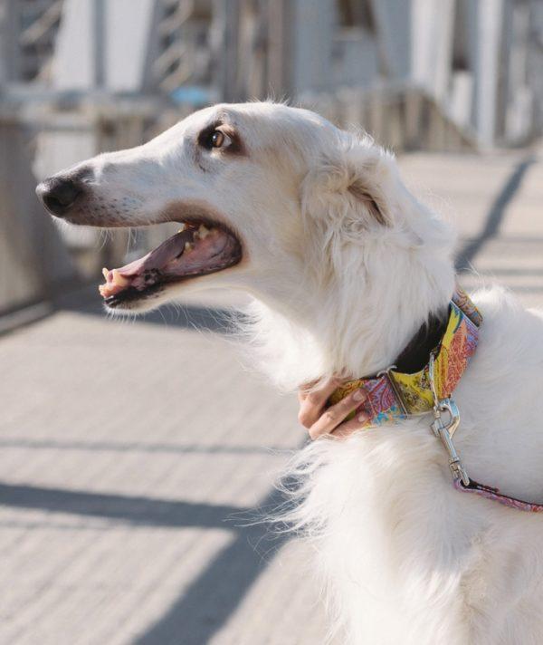 Brott-Dog-Halsband-Textura-Aro-mit-Windhund