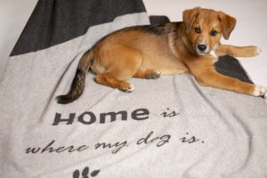 David-Fussenegger-Hundedecke-home-is-where-my-dog-is-mit-welpe