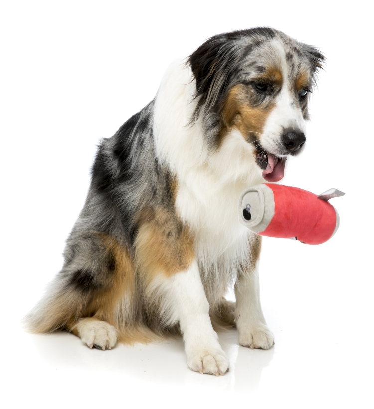 FuzzYard-Hundespielzeug-Bierdose-mit-australian-shepherd-2