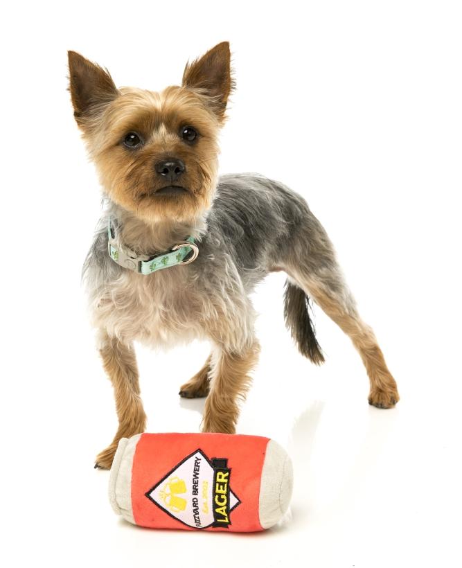 FuzzYard-Hundespielzeug-Bierdose-mit-yorkshire-terrier
