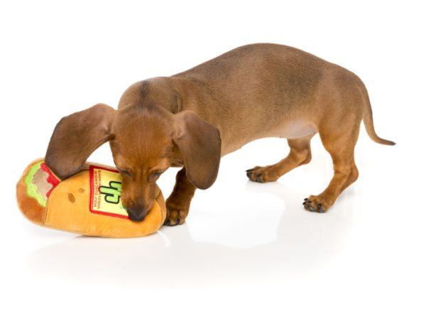 FuzzYard-Hundespielzeug-Burrito-mit-dackel
