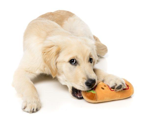 FuzzYard-Hundespielzeug-Burrito-mit-golden-retriever-welpe-1