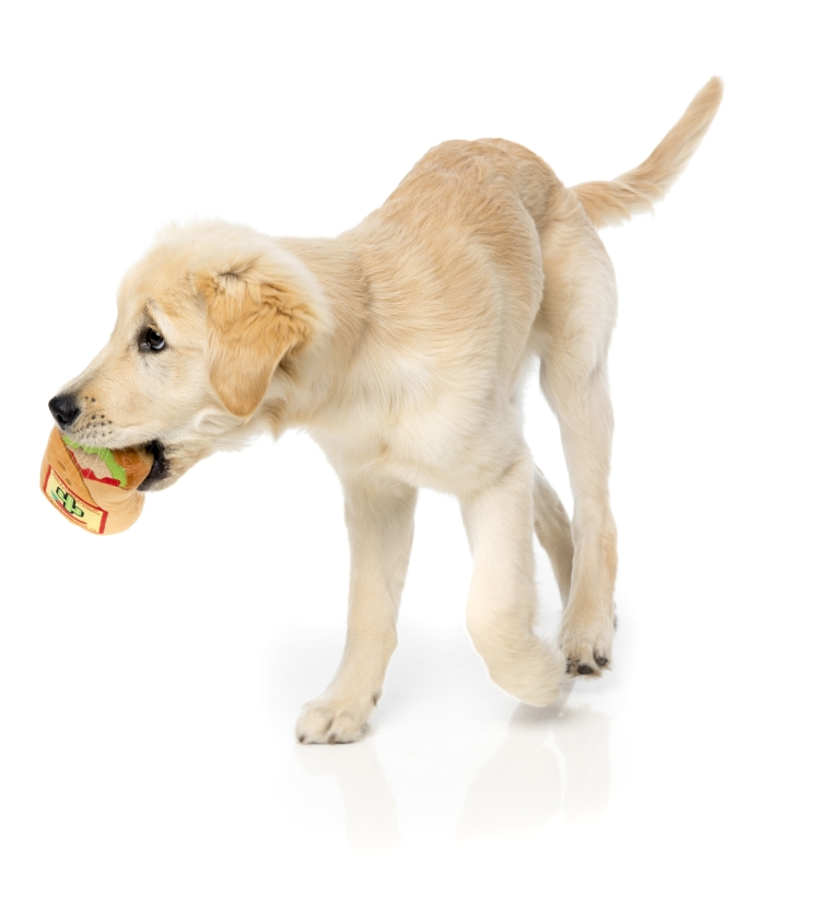 FuzzYard-Hundespielzeug-Burrito-mit-golden-retriever-welpe-3