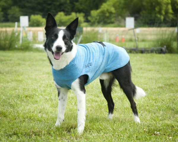 Chilly-Dogs-Bademantel-soaker-robe-Blau-Border-Collie