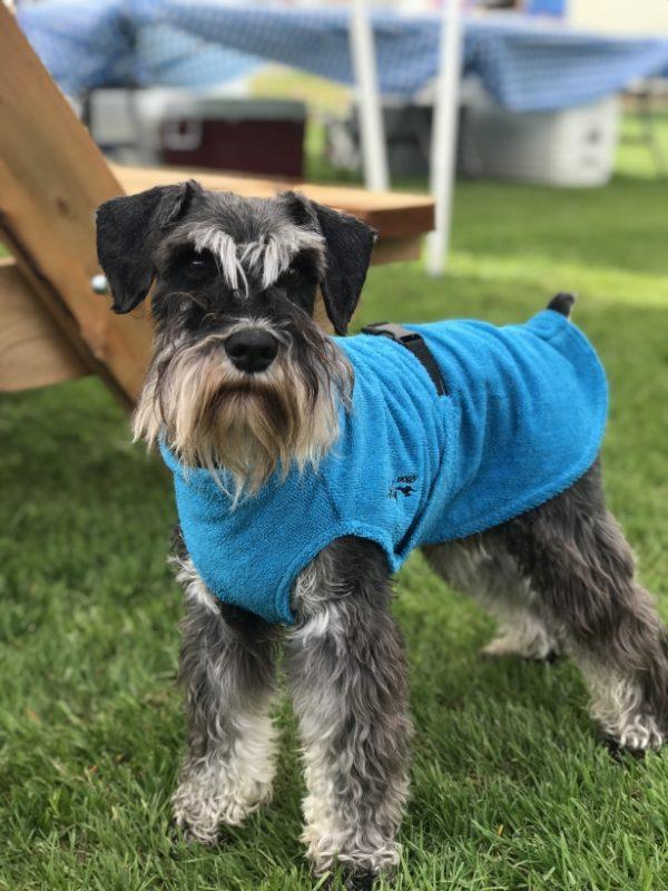 Chilly-Dogs-Bademantel-soaker-robe-Blau-Schnauzer