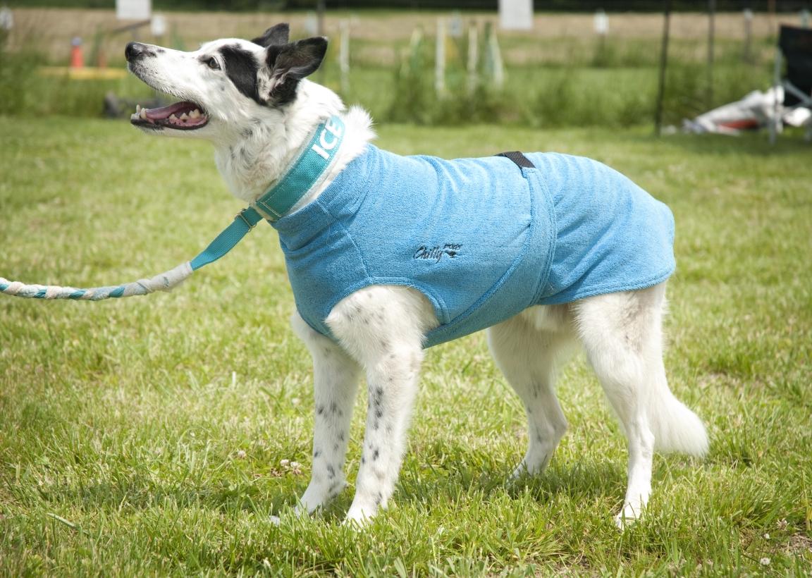Chilly-Dogs-Bademantel-soaker-robe-Blau-bordermix