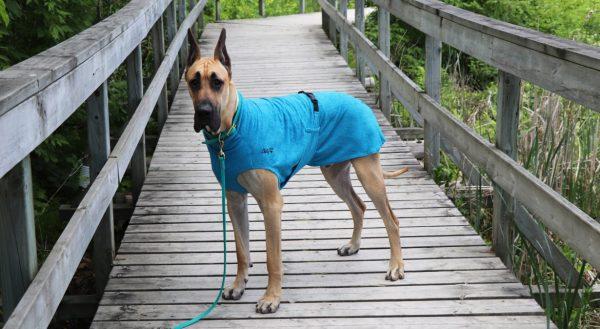 Chilly-Dogs-Bademantel-soaker-robe-Blau-deutsche-dogge-auf-steg