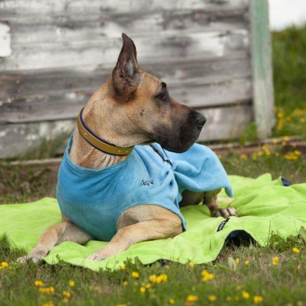 Chilly-Dogs-Bademantel-soaker-robe-Blau-deutsche-dogge-liegend2