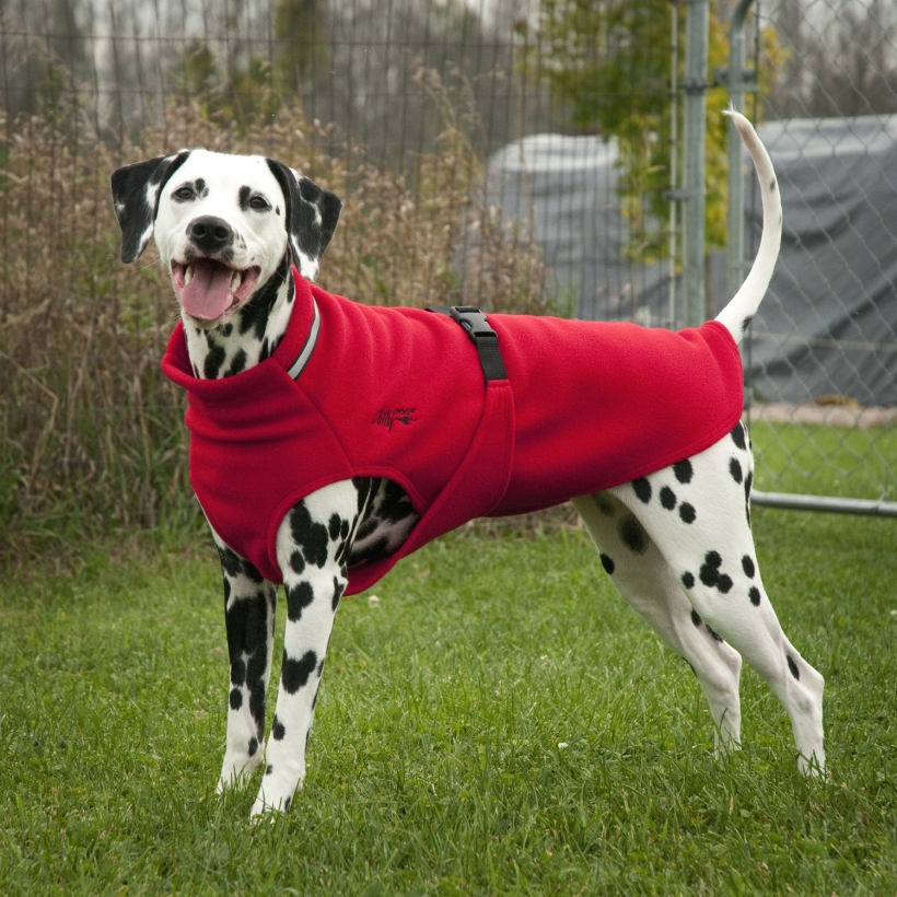 Chilly-Dogs-Chilly-Sweater-Rot-Dalmatiner