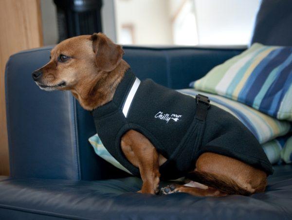 Chilly-Dogs-Chilly-Sweater-Schwarz-Dackelmix-Seitenansicht