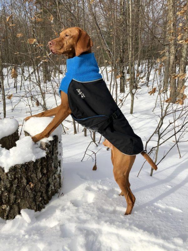 Chilly-Dogs-Great-White-North-Mantel-Blau-Schwarz-Viszla-im-Schnee1