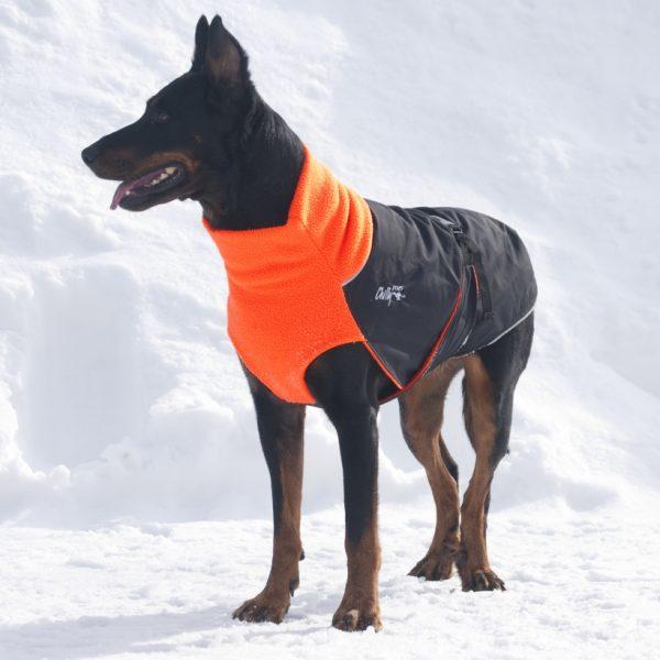 Chilly-Dogs-Great-White-North-Mantel-Orange-Schwarz-Hund-im-Schnee-Frontansicht