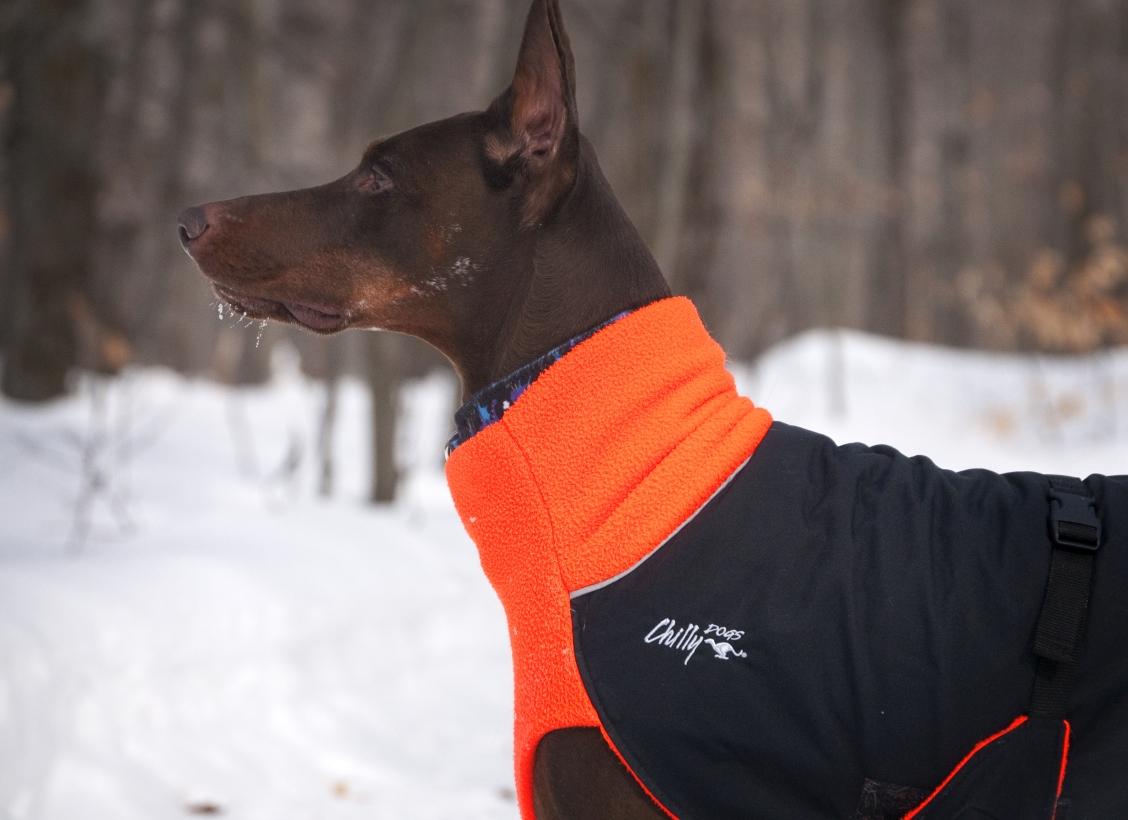 Chilly-Dogs-Great-White-North-Mantel-Orange-Schwarz-Hund-im-Schnee-Nahaufnahme