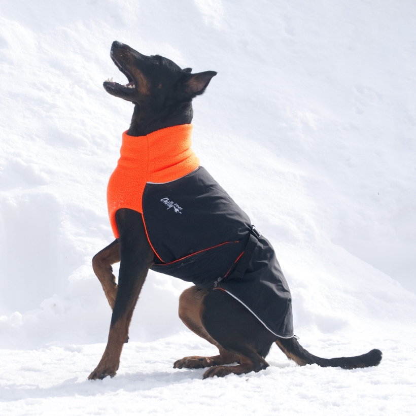 Chilly-Dogs-Great-White-North-Mantel-Orange-Schwarz-Hund-im-Schnee-Seitenansicht