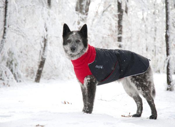 Chilly-Dogs-Great-White-North-Mantel-Rot-Schwarz-Hund-im-Schnee