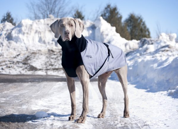 Chilly-Dogs-Great-White-North-Mantel-Schwarz-Grau-Weimaraner-im-Schnee