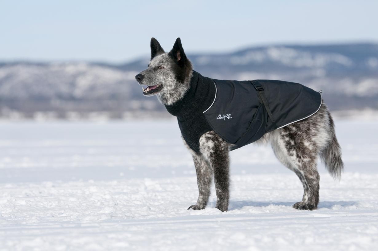Chilly-Dogs-Great-White-North-Mantel-Schwarz-Schwarz-Hund-im-Schnee
