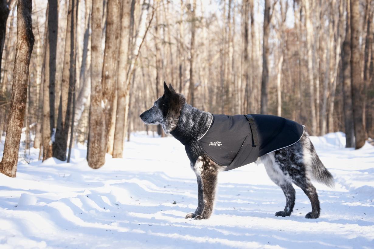 Chilly-Dogs-Great-White-North-Mantel-Schwarz-Schwarz-Hund-im-Schnee2
