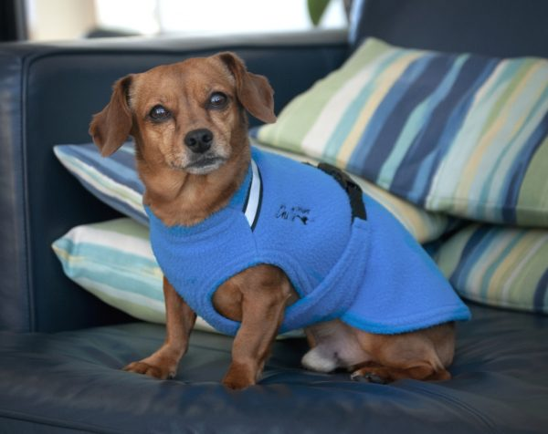 Chilly-Dogs-Chilly-Sweater-Blau-Dackelmix