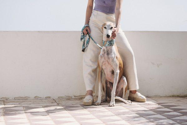Brott-Dog-Barcelona-Textura-Begur-Leine-Halsband-Galgo